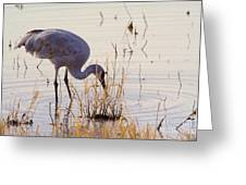 Sand Hill On The Shores Greeting Card