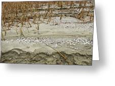 Sand Stone And Reeds Greeting Card