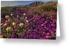 Sand Verbena Coyote Mountains Anza Borrego State Park California Greeting Card