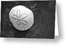 Sanddollar Greeting Card