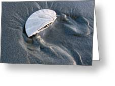 Sanddollar Greeting Card