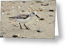 Sanderling Greeting Card