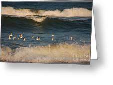Sanderlings In Flight Greeting Card