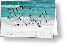 Sandestin Seagulls B Greeting Card