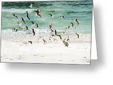 Sandestin Seagulls D Greeting Card