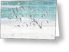 Sandestin Seagulls E Greeting Card