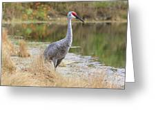 Sandhill Beauty By The Pond Greeting Card