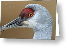 Sandhill Crane 6 Greeting Card