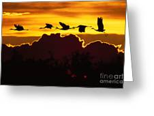 Sandhill Crane At Sunset Greeting Card