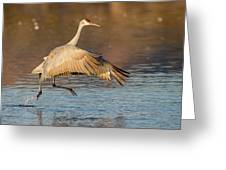 Sandhill Crane Dance Greeting Card