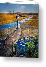 Sandhill Crane In The Glades Greeting Card