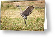 Sandhill Crane Morning Stretch Greeting Card
