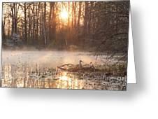 Sandhill Crane On Nest Greeting Card
