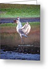 Sandhill Crane Painted Greeting Card