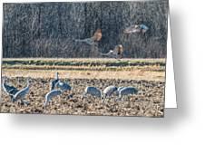 Sandhill Crane Series #3 Greeting Card