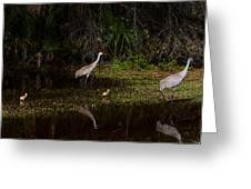 Sandhill Cranes And Chicks Greeting Card