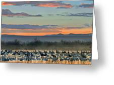 Sandhill Cranes And Snow Geese Greeting Card