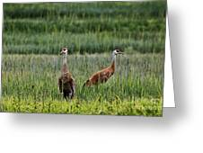 Sandhill Cranes II Greeting Card