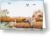 Sandhill Cranes-jp3159 Greeting Card