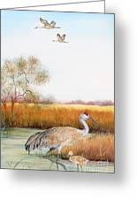 Sandhill Cranes-jp3160 Greeting Card