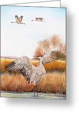 Sandhill Cranes-jp3161 Greeting Card