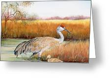 Sandhill Cranes-jp3162 Greeting Card