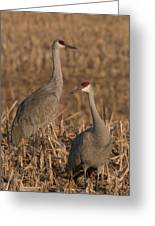 Sandhill Cranes On Watch Greeting Card