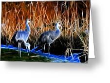 Sandhill Cranes Pair Fractal Greeting Card