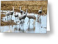 Sandhill Gang Greeting Card
