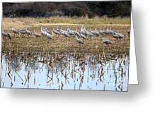 Sandhill Herd By Pond Greeting Card