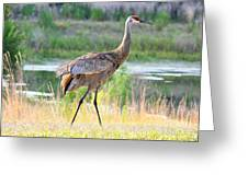 Sandhill In The Sunshine Greeting Card by Carol Groenen
