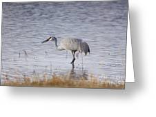 Sandhill On The Shore Greeting Card
