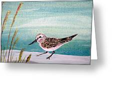 Sandpiper And Conch Greeting Card