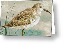 Sandpiper I Greeting Card