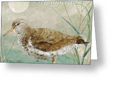 Sandpiper II Greeting Card