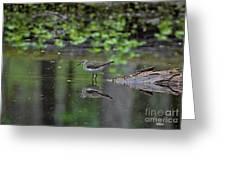 Sandpiper In The Smokies II Greeting Card