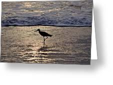 Sandpiper On A Golden Beach Greeting Card