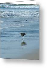 Sandpiper On The Beach Greeting Card