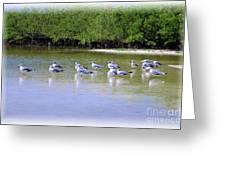 Sandpiper Party Greeting Card