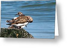 Sandpipers 2 Greeting Card