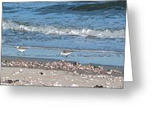 Sandpipers And Seashells - Poster Greeting Card