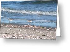 Sandpipers At The Seashore Greeting Card