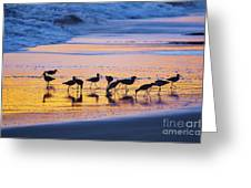 Sandpipers In A Golden Pool Of Light Greeting Card