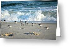 Sandpipers Running Everywhere Greeting Card