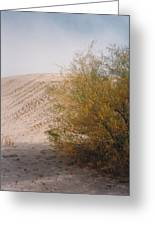 Sands Of Monahans Greeting Card