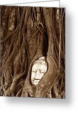 Sandstone Buddha Head Overgrown By Banyan Tree Thailand Greeting Card