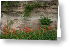 Sandstone Lilies Greeting Card