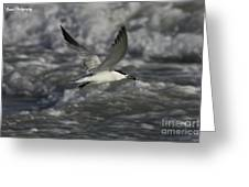 Sandwhich Tern Flies Over Stormy Waves Greeting Card