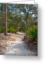 Sandy Path In Hunting Island South Carolina Greeting Card