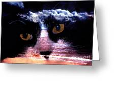 Sandy Paws Greeting Card by Clayton Bruster